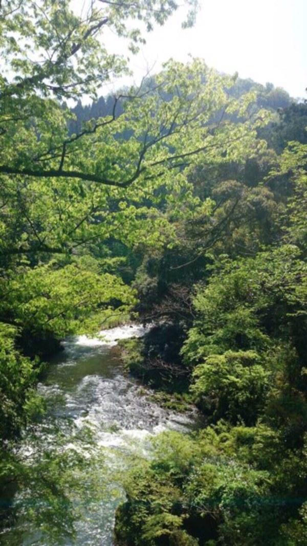 アナスタ今週(6/8〜)の瞑想