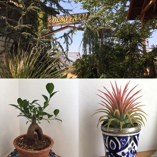 Zoomと植物たちと炭治郎耳飾り